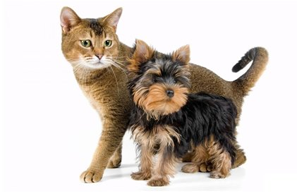 Pet Insurance comparison in Valladolid